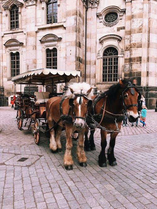 Imagine de stoc gratuită din animal, arhitectură, cai, călătorie