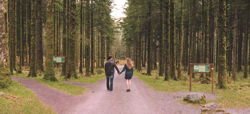 Free stock photo of engagement, greenwood, landscape