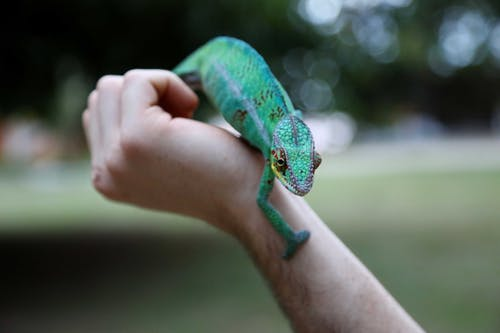 Green Reptile on Hand