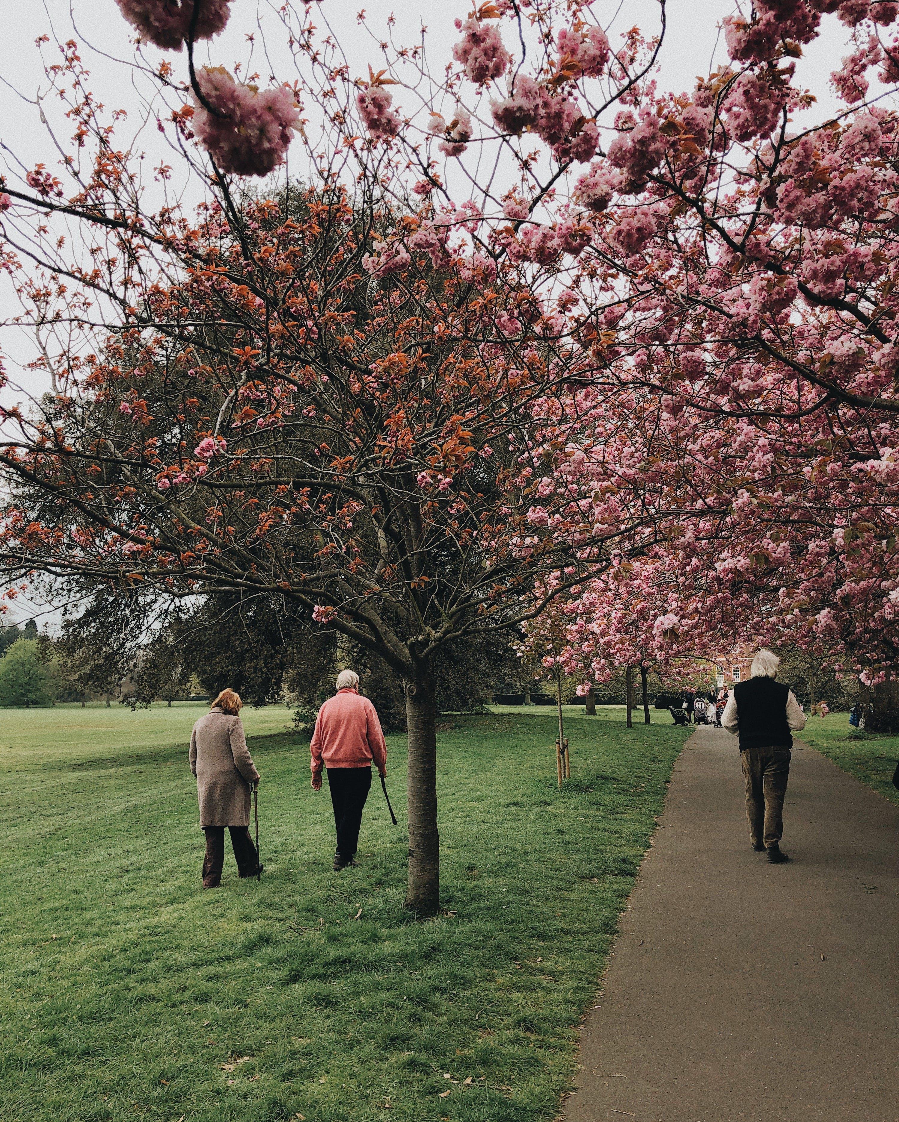 Základová fotografie zdarma na téma chůze, denní světlo, dřevo, flóra