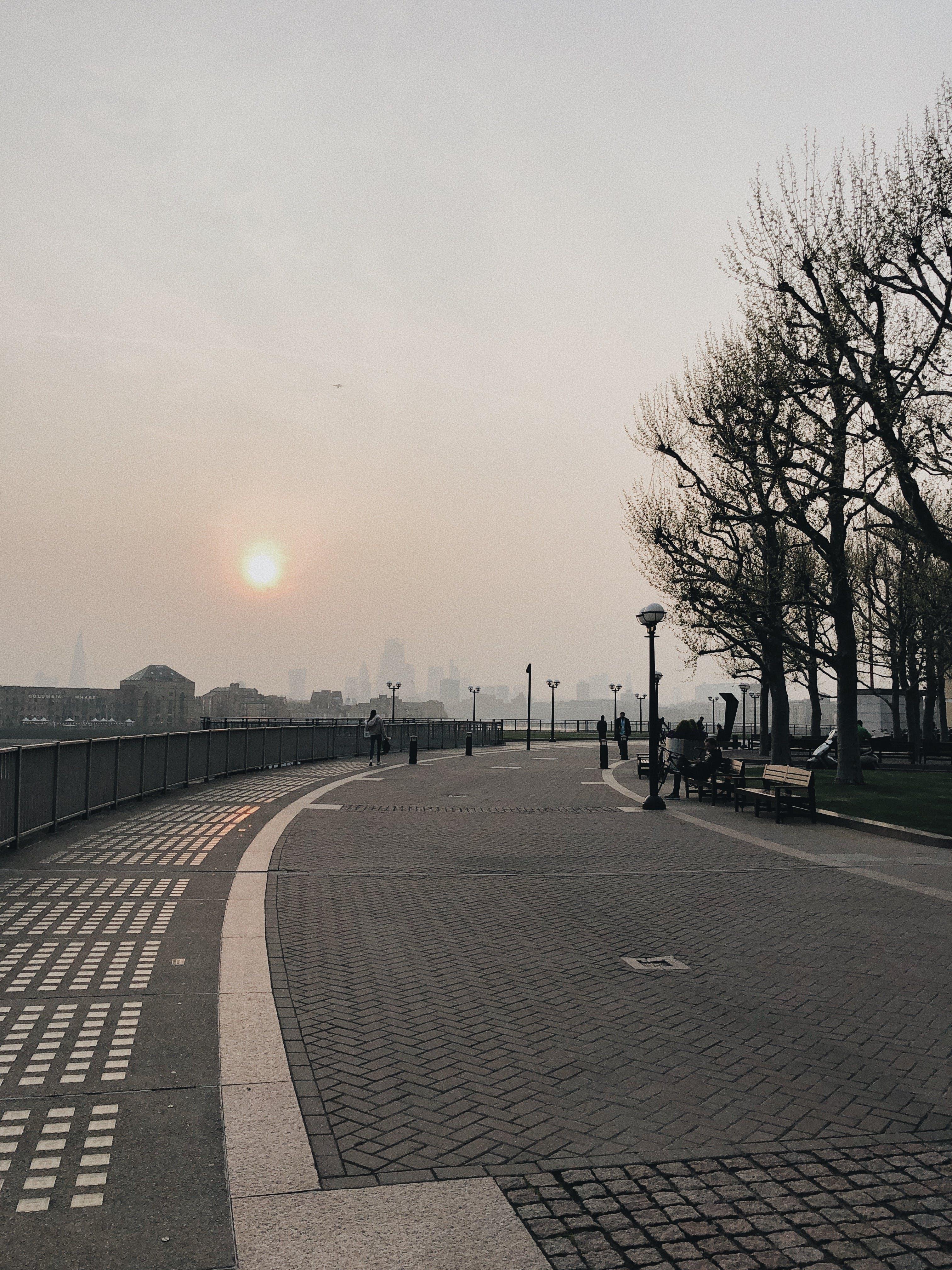 光, 光禿禿的, 公園, 天氣 的 免費圖庫相片