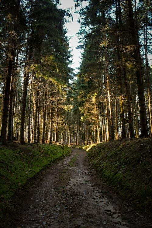 Green Grass Pathway