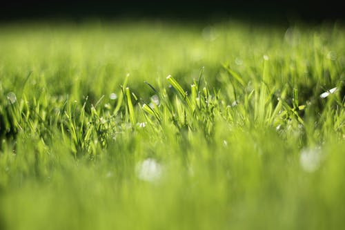 Free stock photo of 50mm, blade of grass, bokeh, bright