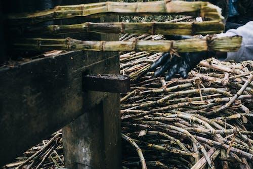 Ilmainen kuvapankkikuva tunnisteilla maalaiselämä, maanviljely, siirappi, sokeriruoko