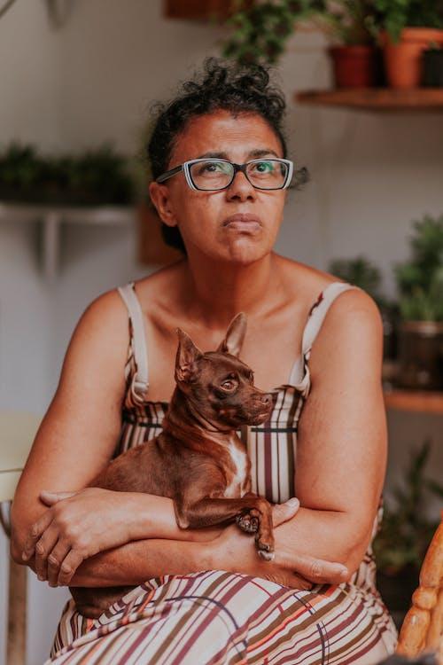Imagine de stoc gratuită din agrement, animal de casă, așezat, câine