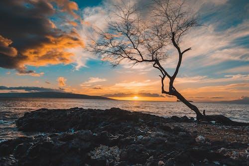 Foto d'estoc gratuïta de arbre nu, capvespre, maui, platja