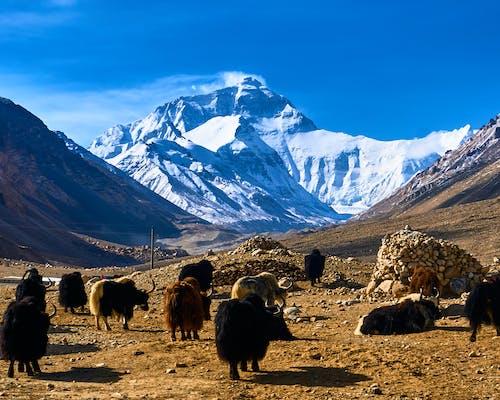 Kostenloses Stock Foto zu berg, berge, blau, china