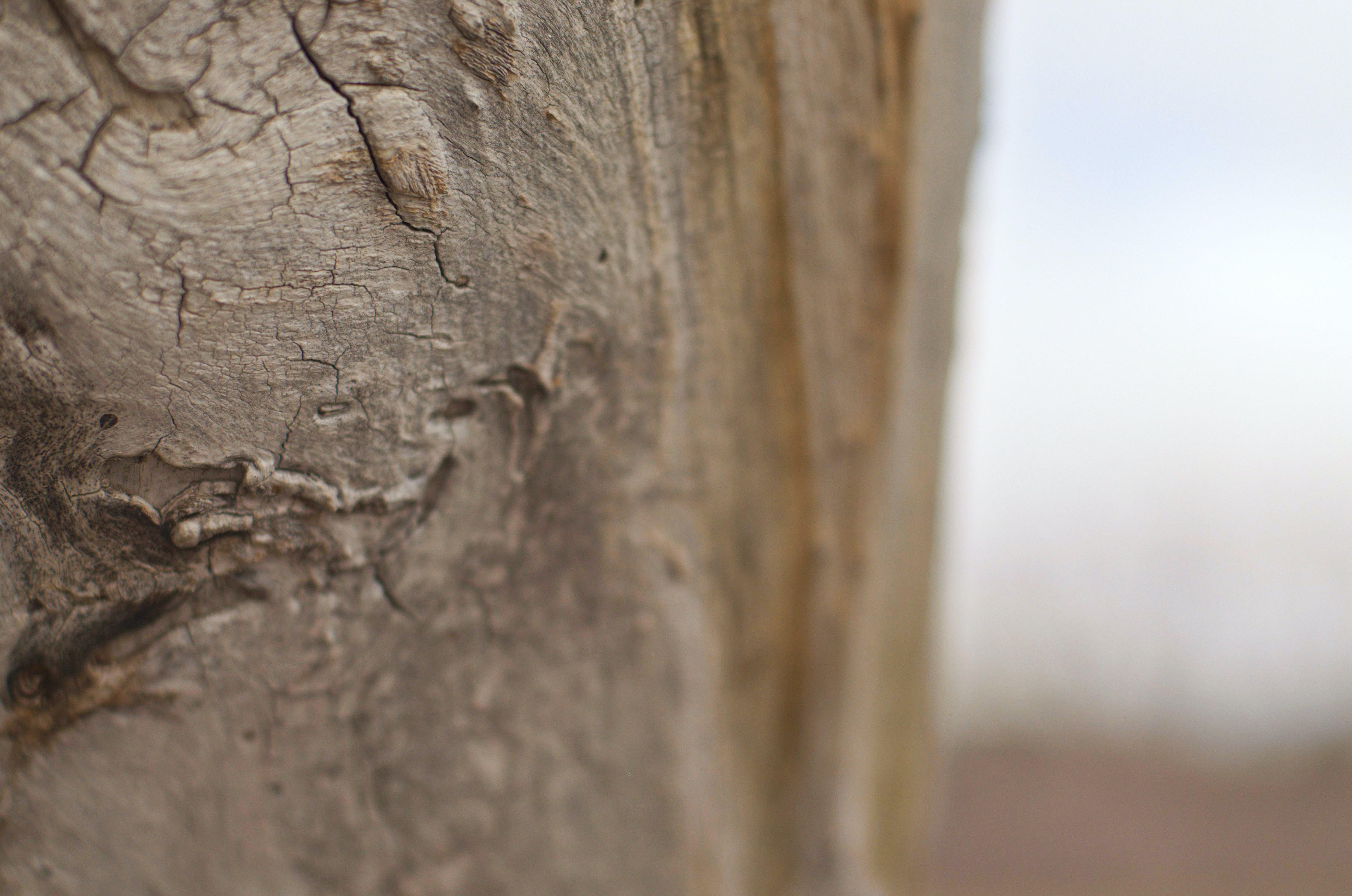 Gratis lagerfoto af abstrakt, brun, tekstur, træ