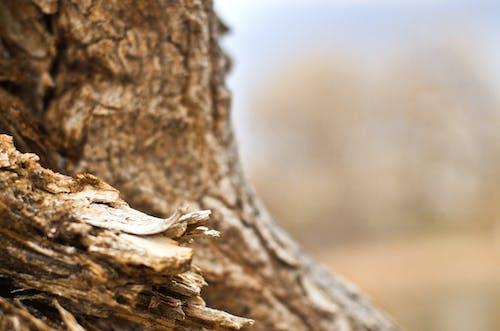 抽象, 木, 木材, 褐色の無料の写真素材