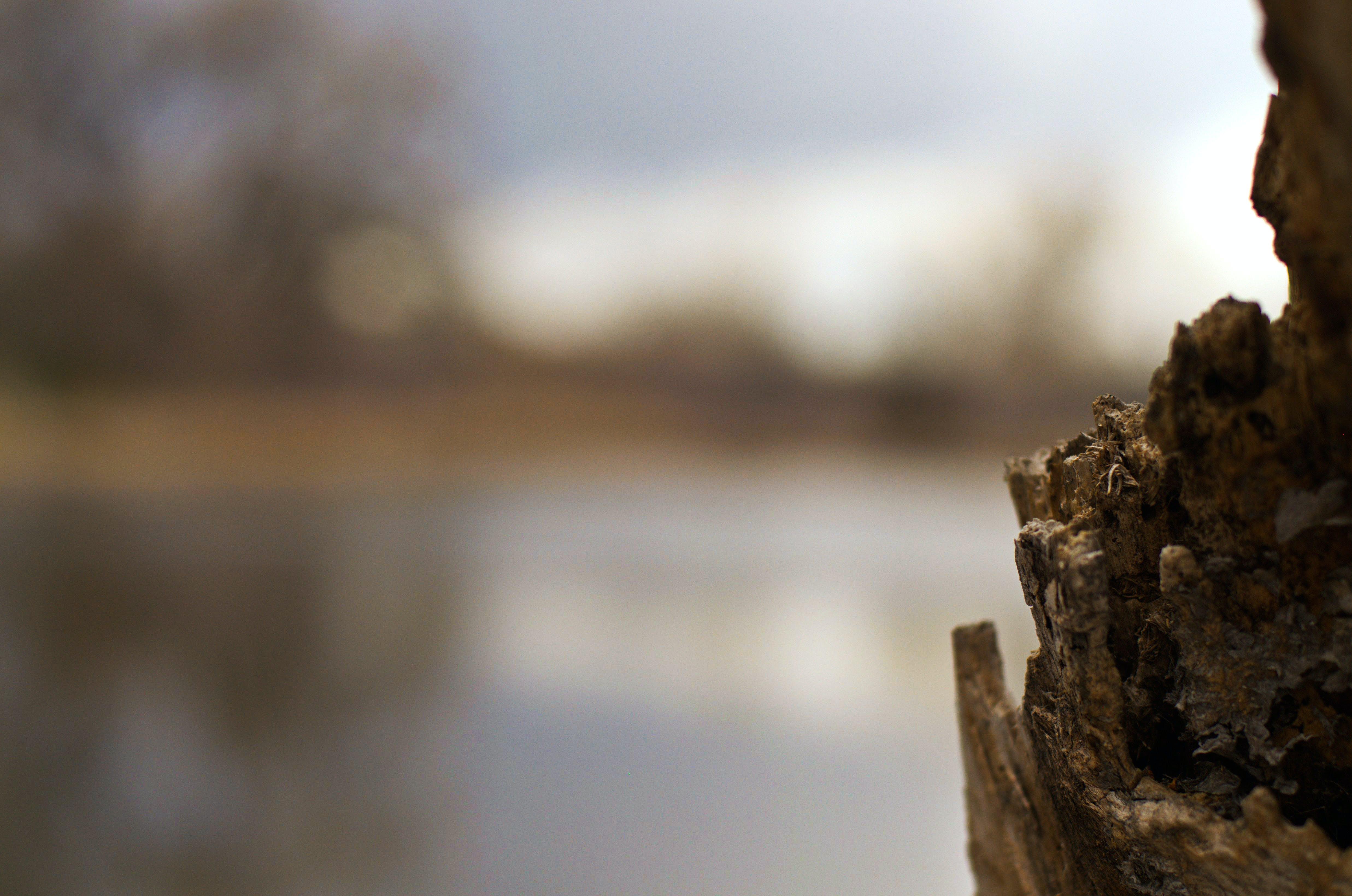 Gratis lagerfoto af abstrakt, træ
