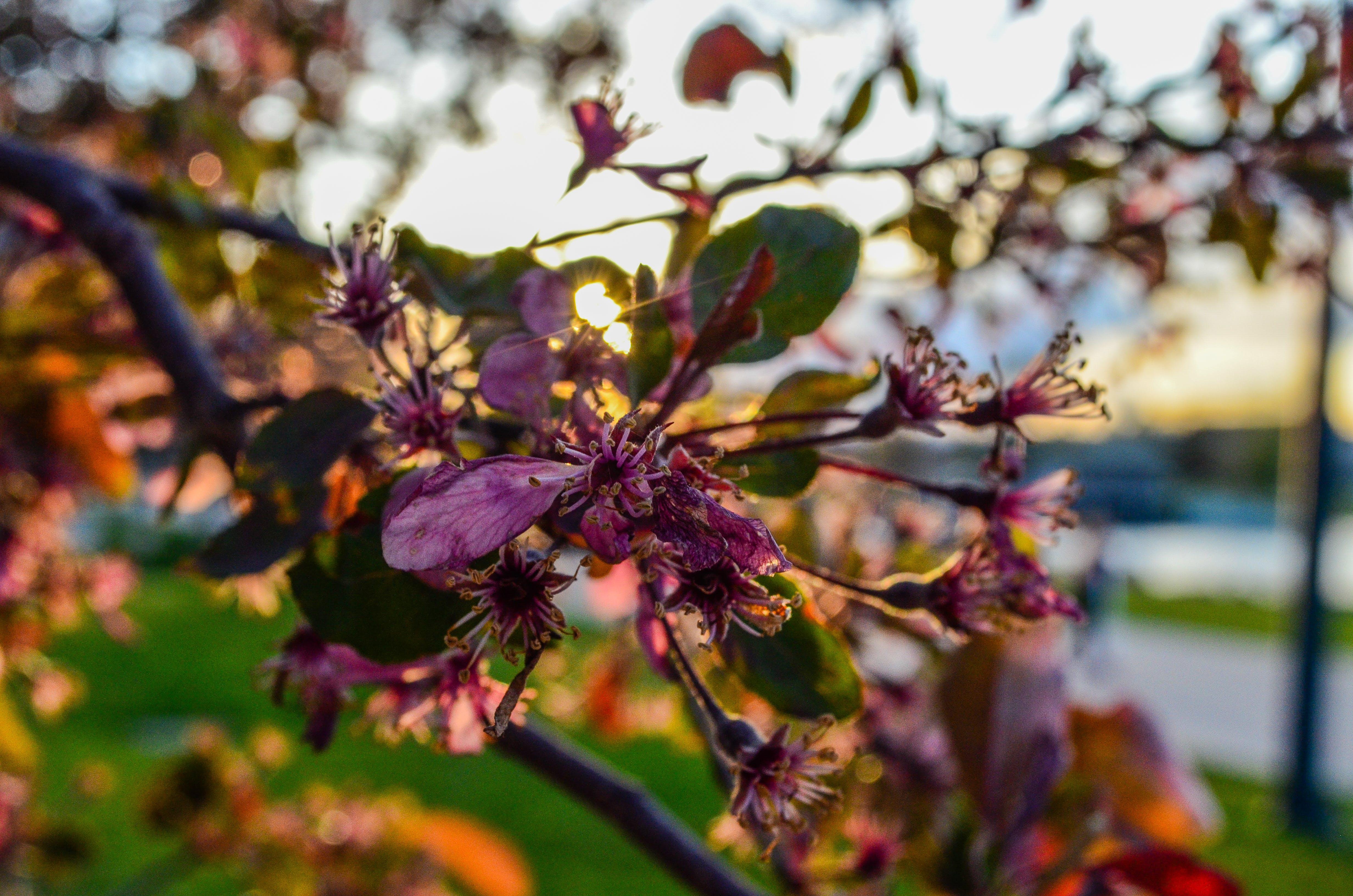 Gratis lagerfoto af blomst, skinne, sol