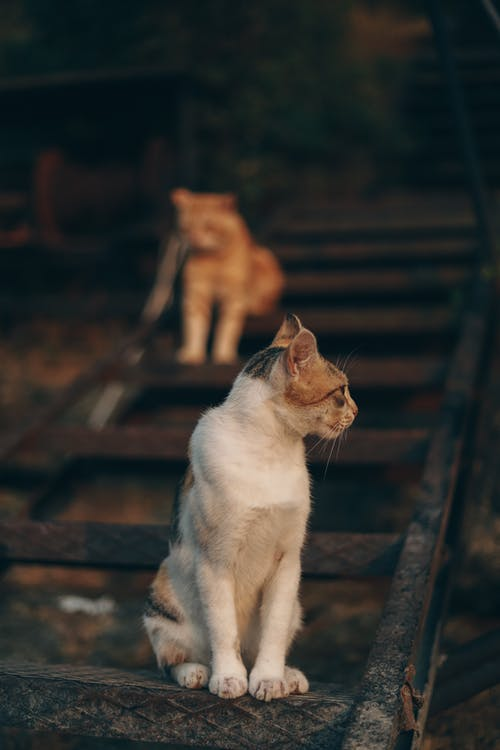 Selective Focus Photo of Short-haired Cat on Train Rail Looking away