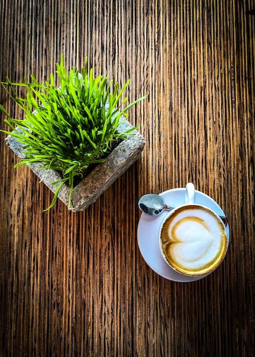 卡布奇諾, 早上, 牛奶, 綠色 的 免費圖庫相片