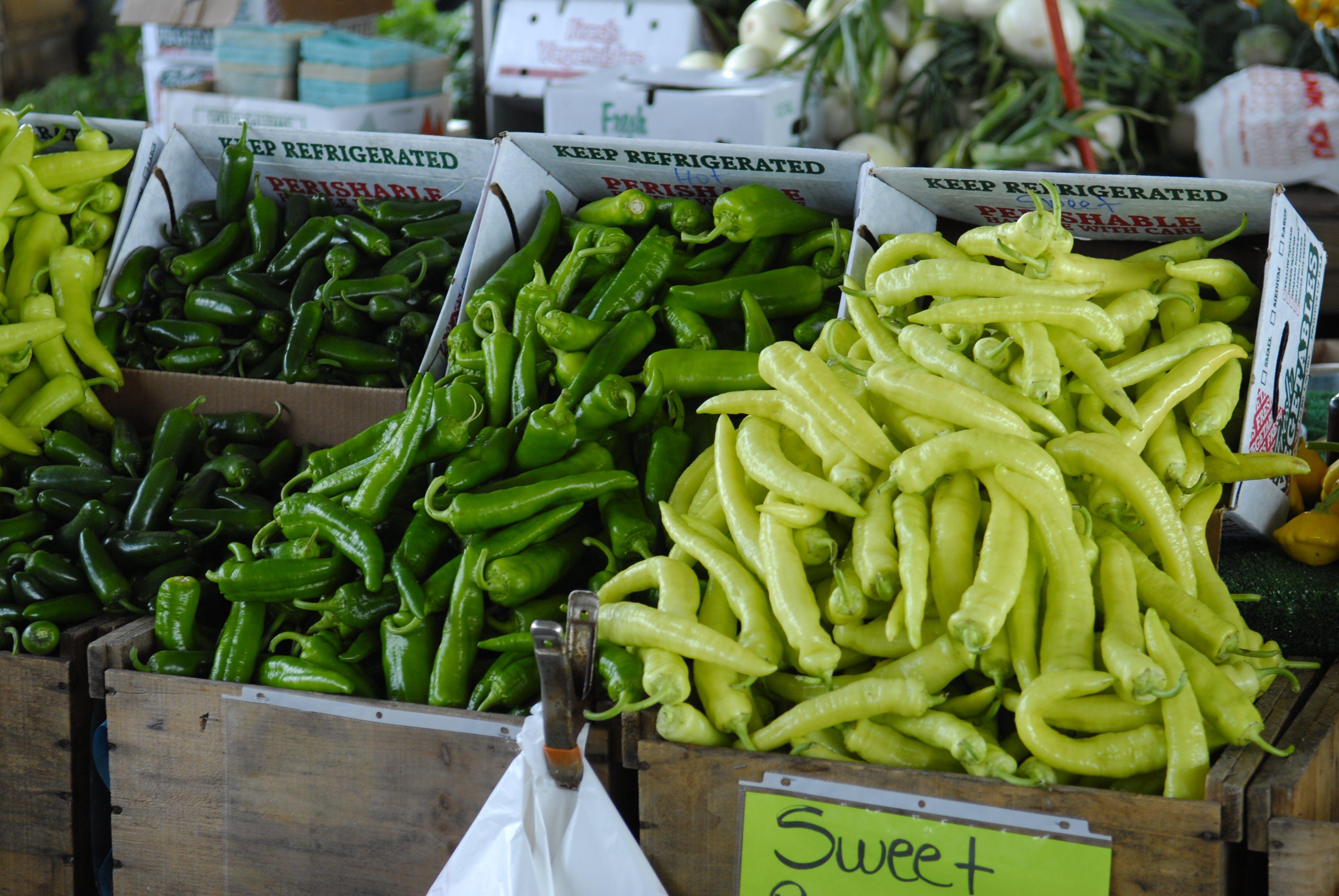 건강한, 고추, 녹색, 농업의 무료 스톡 사진