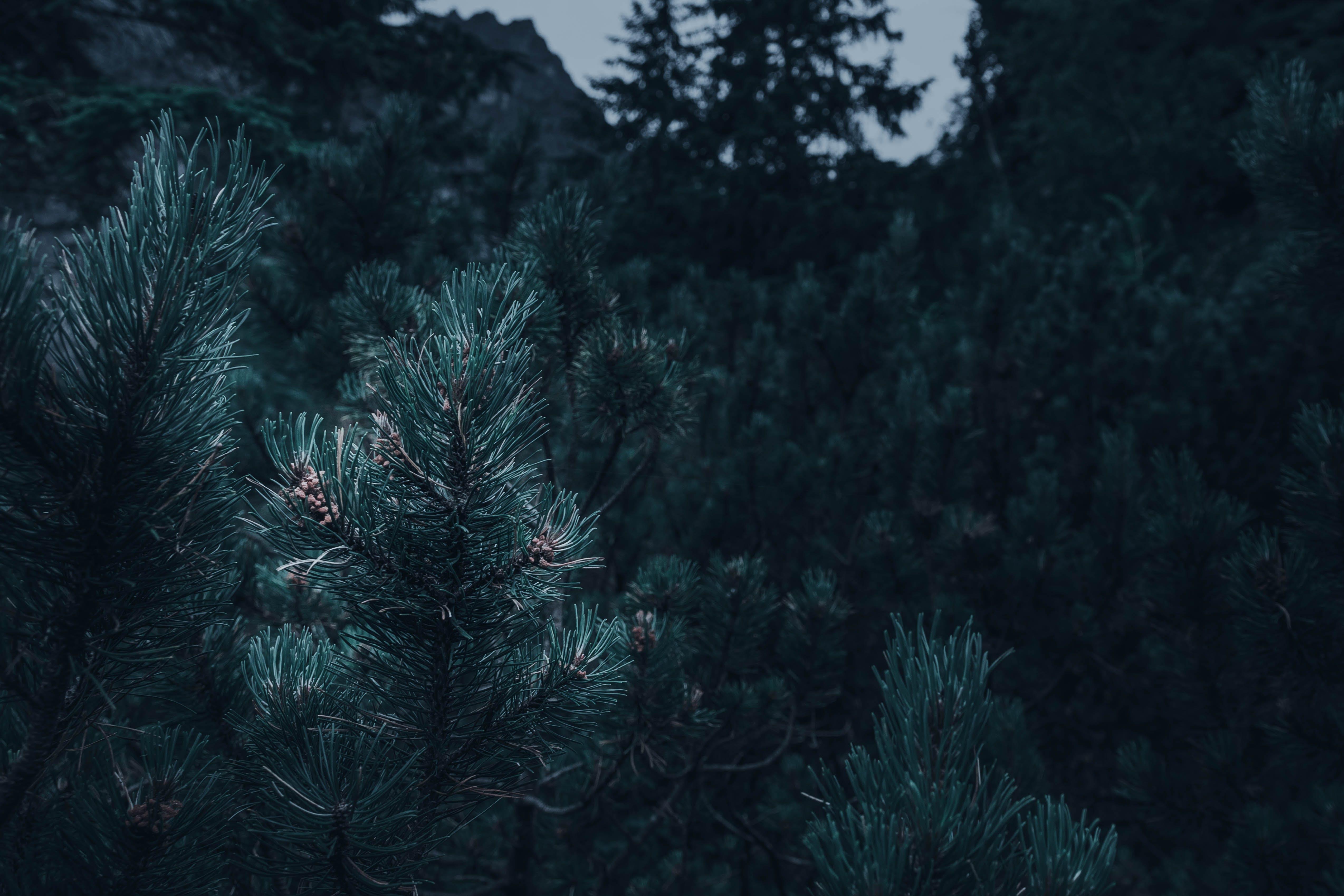 Kostenloses Stock Foto zu bäume, blau, dunkel, dunkelblau