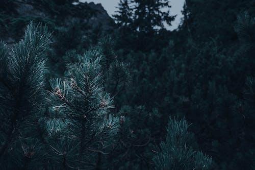 ダーク, ムーディー, ムード, 木の無料の写真素材