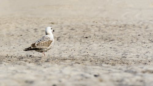 Free stock photo of beach, depth of field, seagull