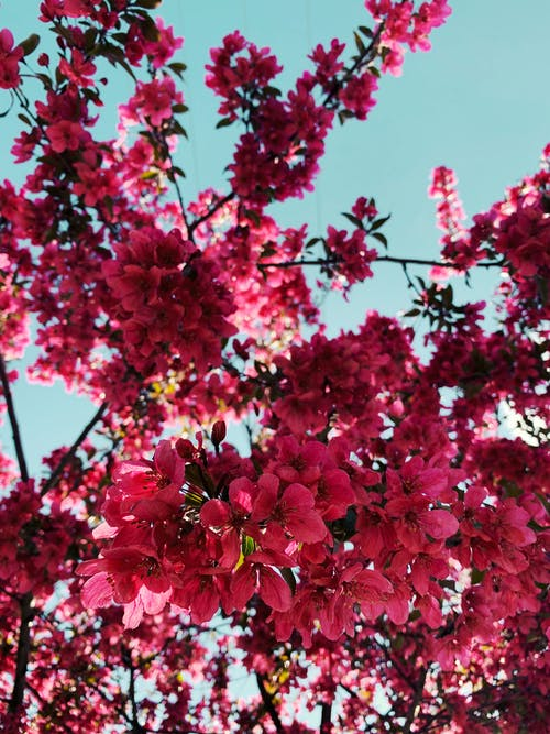Darmowe zdjęcie z galerii z drzewo, flora, gałąź, kwiaty
