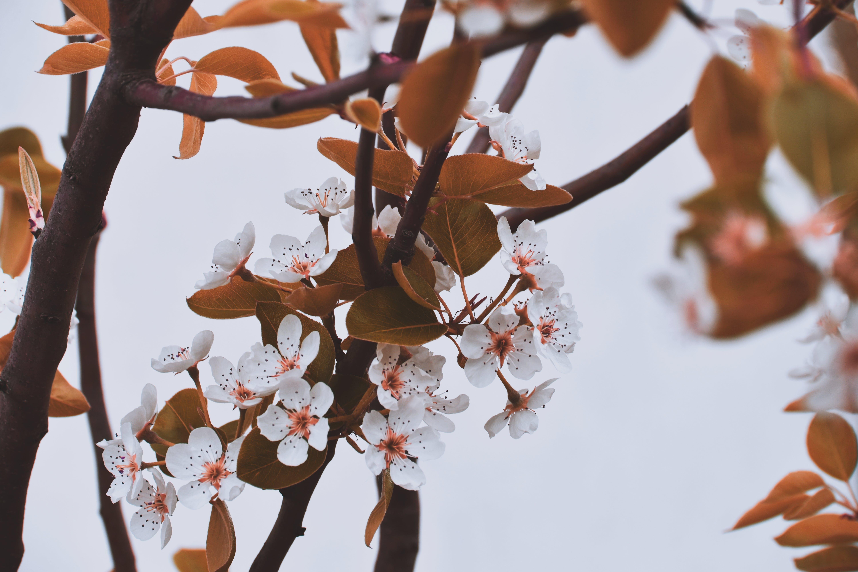 分公司, 季節, 植物群, 樹 的 免費圖庫相片