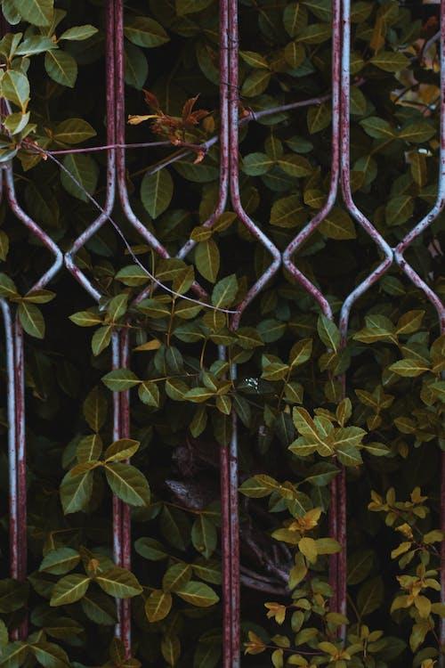 Ảnh lưu trữ miễn phí về ánh sáng ban ngày, cận cảnh, cây, hàng rào
