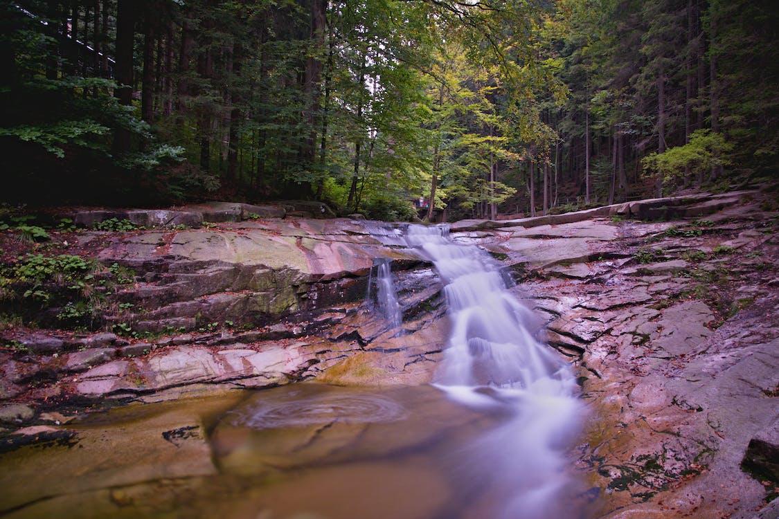 aigua, arbres, bonic
