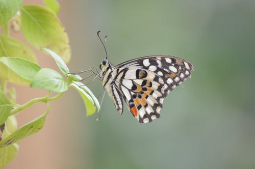 Free stock photo of animal, butterfly