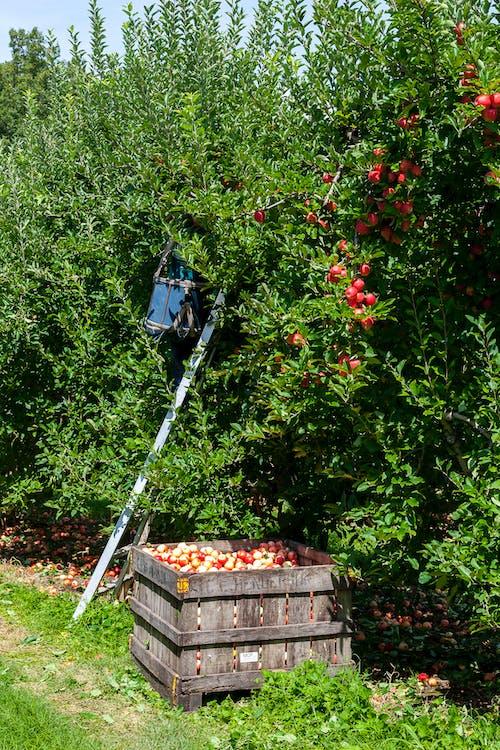 agricultura, alimento, ao ar livre