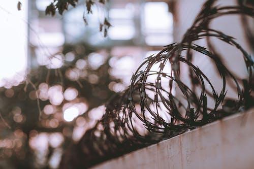 Fotos de stock gratuitas de afilado, alambres de púas, profundidad de campo