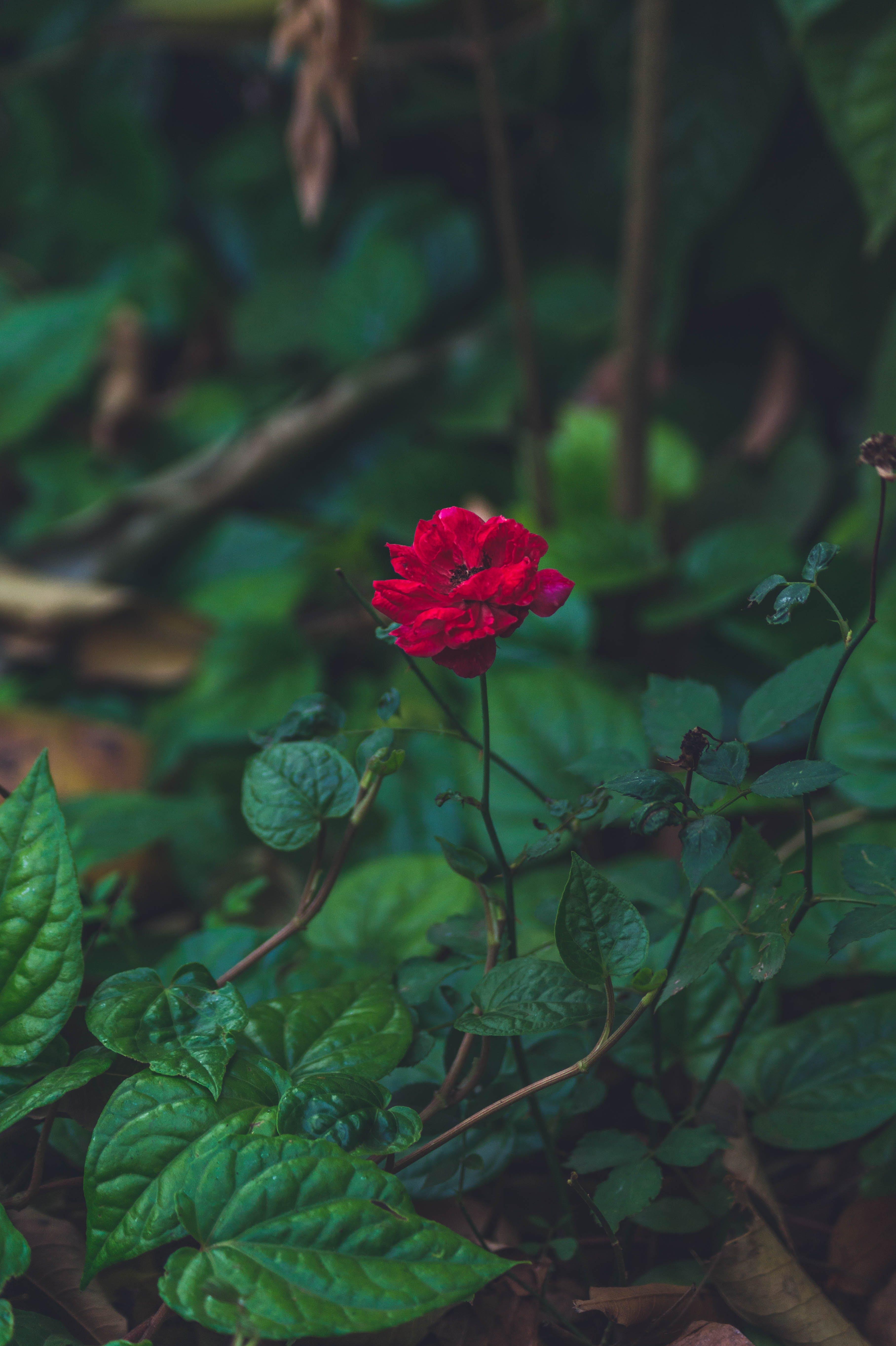 Free stock photo of beautiful, beautiful flower, beautiful flowers, beauty in nature