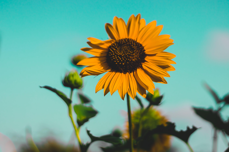 Fotos de stock gratuitas de al aire libre, amarillo, bonito, crecimiento
