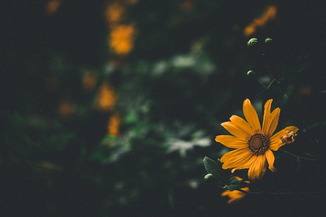 λιβάδι με λουλούδια