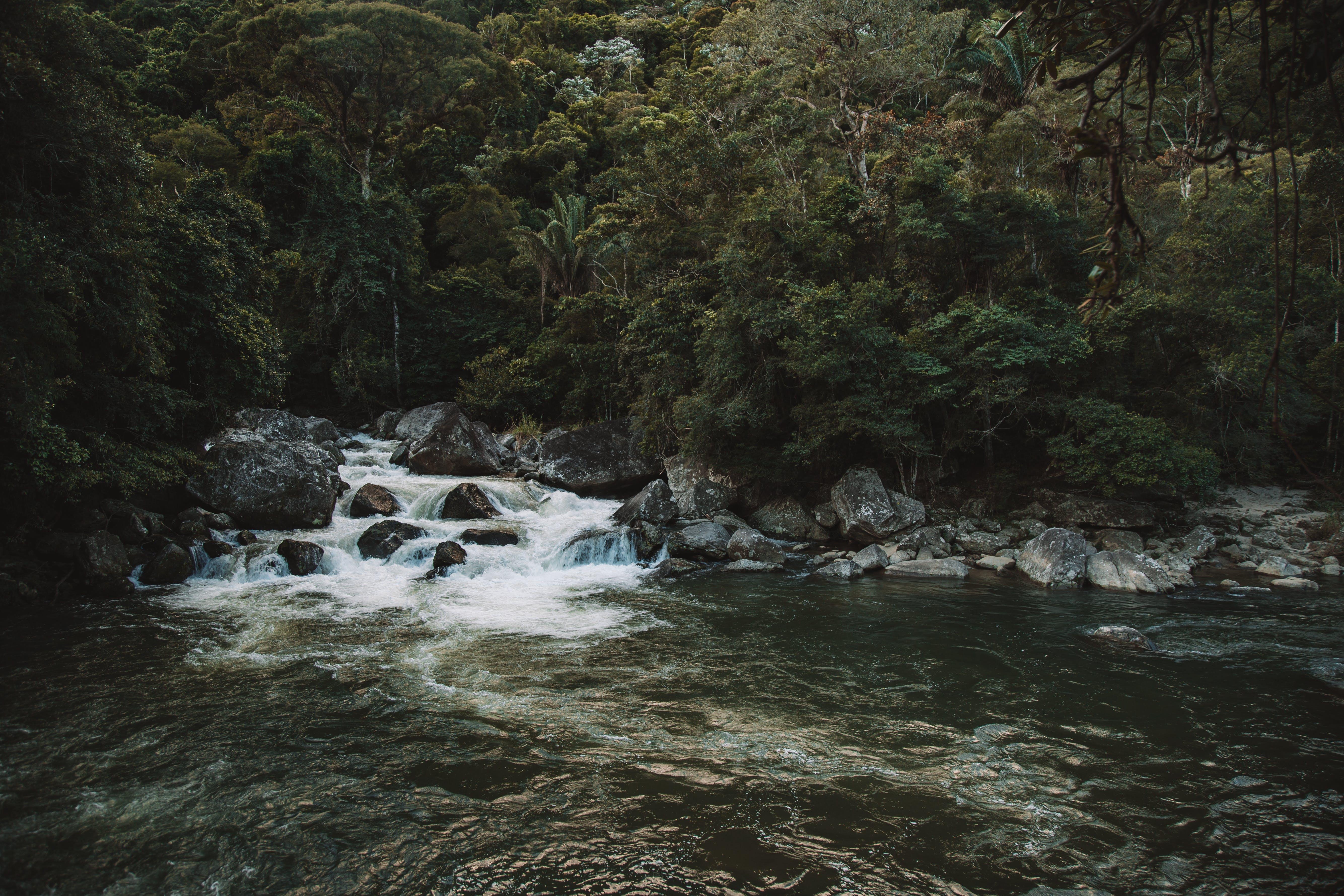 Безкоштовне стокове фото на тему «вода, Водоспад, гора, дерева»