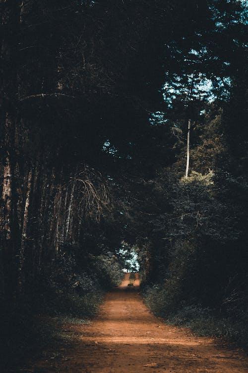 Immagine gratuita di alberi, strada, strada sterrata