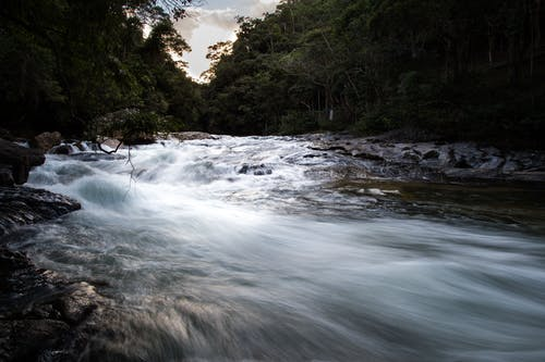 Imagine de stoc gratuită din apă curgătoare, arbori, curent, expunere lungă