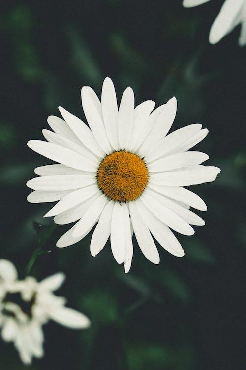Δωρεάν στοκ φωτογραφιών με ανθίζω, λευκό λουλούδι