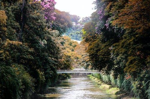 Ilmainen kuvapankkikuva tunnisteilla joki, puut, silta