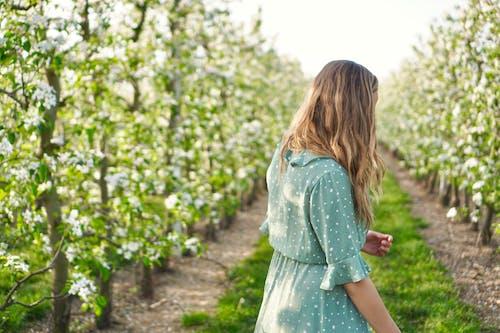 Kostnadsfri bild av äppelblom, vy bakifrån