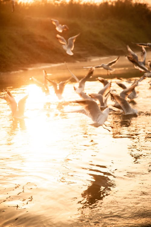 Free stock photo of birds, delhi, india, river