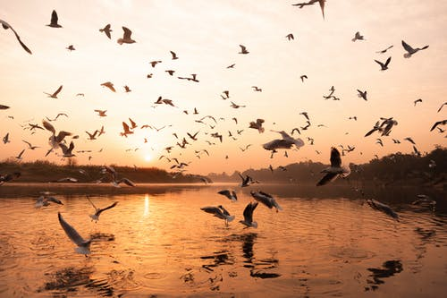 Free stock photo of delhi, india, river, seagulls