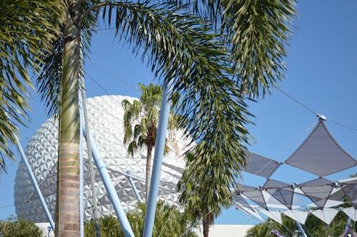 Darmowe zdjęcie z galerii z disney, drzewo palmowe, epcot, świat disney'a