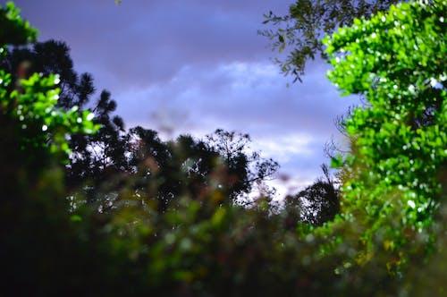 Darmowe zdjęcie z galerii z burzliwy, dramatyczny, drzewa, pochmurny