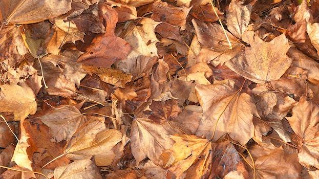 Kostenloses Stock Foto zu natur, trocken, muster, blätter