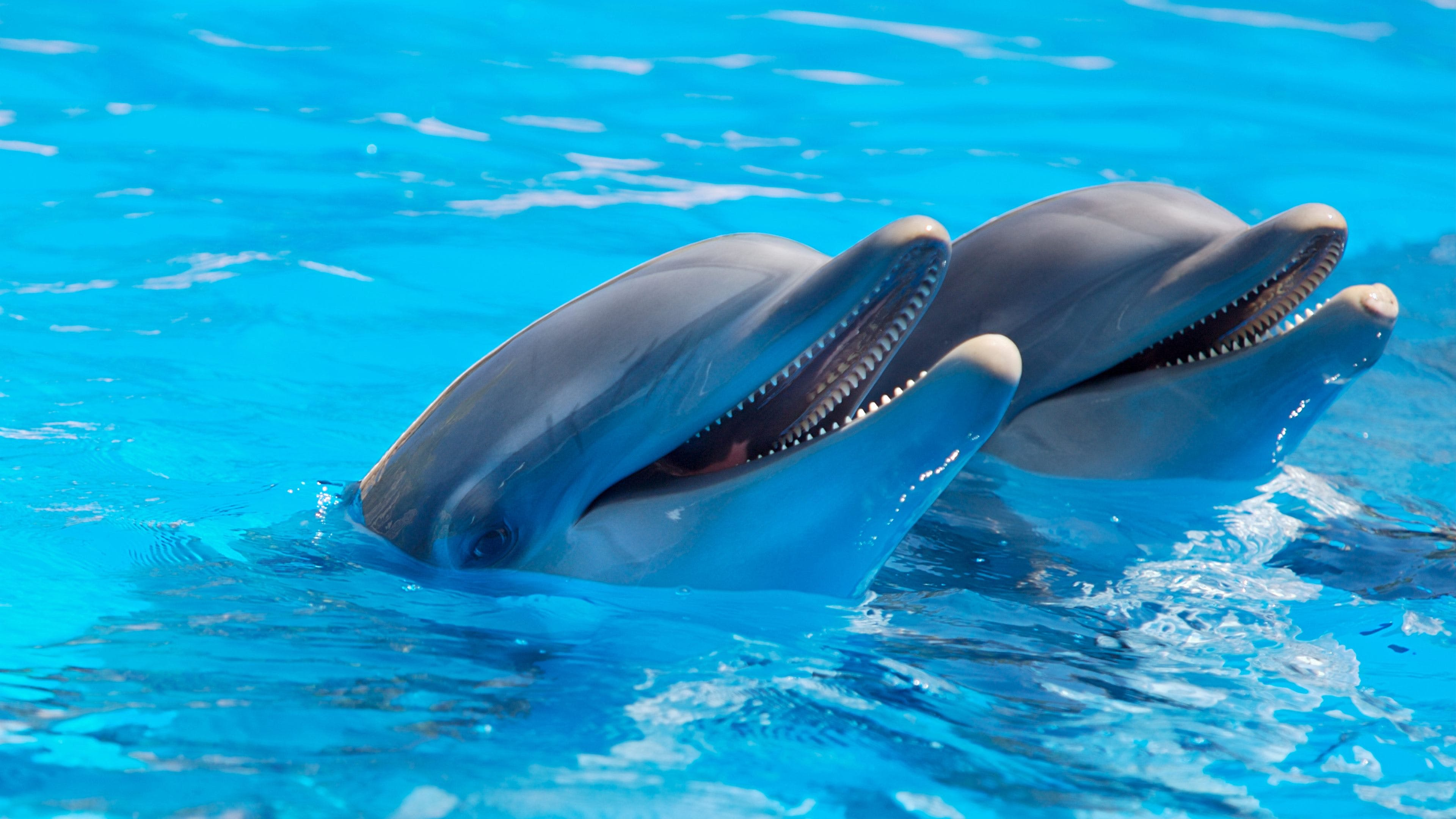 2 Dolphin during Daytime