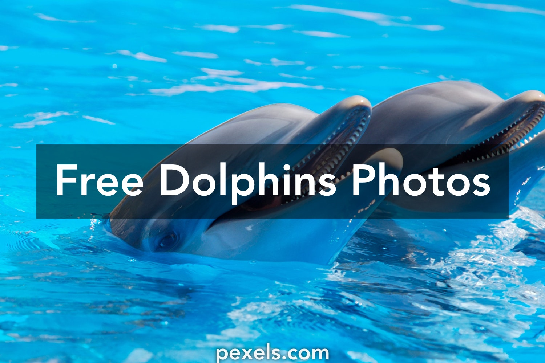 10 amazing dolphins photos pexels free stock photos