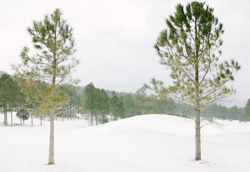 Immagine gratuita di alberi, boschi, colline coperte di neve, congelando