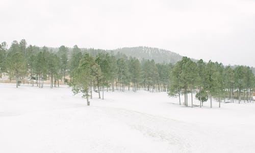 Immagine gratuita di alberi, boschi, colline, congelando