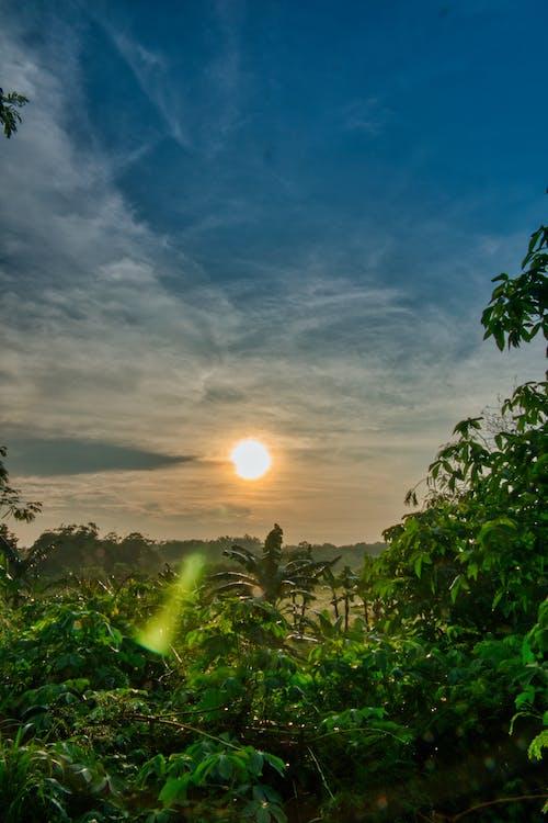 คลังภาพถ่ายฟรี ของ กลางวัน, กลางแจ้ง, ดวงอาทิตย์, ต้นไม้
