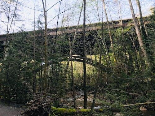 Free stock photo of bridges, vancouver