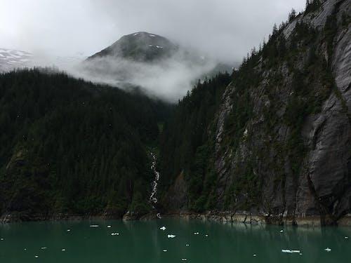 Photos gratuites de arbres, baie, bateaux, brouillard