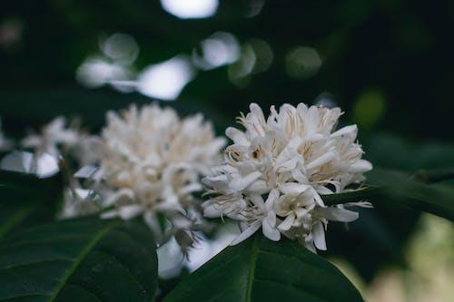 가지, 계절, 꽃, 꽃이 피는의 무료 스톡 사진